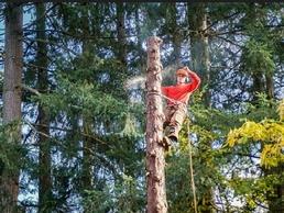 https://www.treesurgeoninguildford.co.uk website