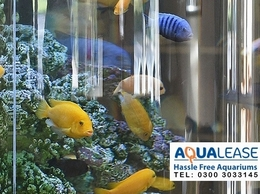 https://www.aqualease.co.uk/ website