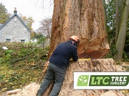https://www.ltctreesurgery.co.uk/ website