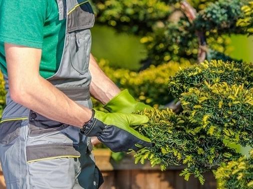 https://www.gardeneruk.co.uk/gardener-york.html website